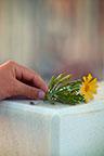 Flower on Grave