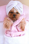 Self-Care - Pampered Dog